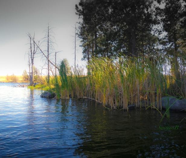 shade-lake-shelter-Oregon-photography-SwittersB