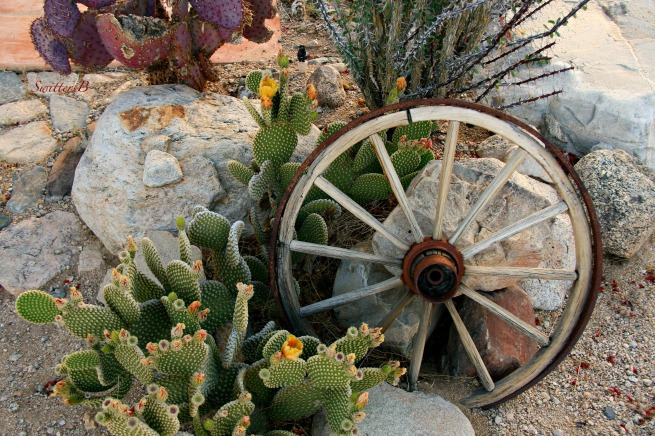 wagon wheel-desert-cactus-mojave-SwittersB-Joshua Tree