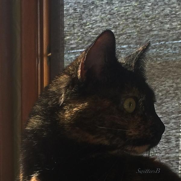Cat, Pet, Tortoise Shell, Alert, SwittersB