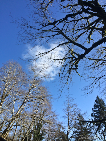 beckoning-blue sky-branches-Oregon-SwittersB