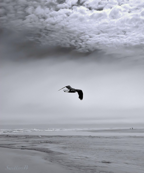 Oregon Coast-Bird-Flight-Beach-SwittersB