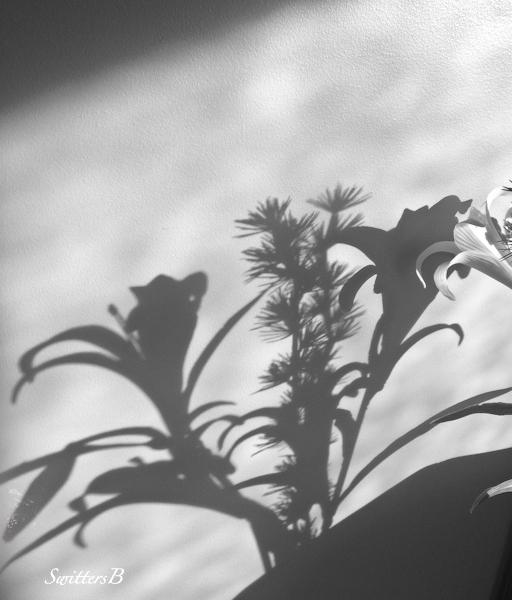 flowers-shadows-photography-SwittersB-light