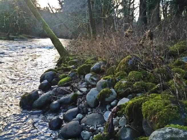 Oregon, shoreline, river, high water signs, SwittersB