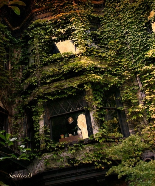 Ivy-Windows-photography-Seattle-SwittersB