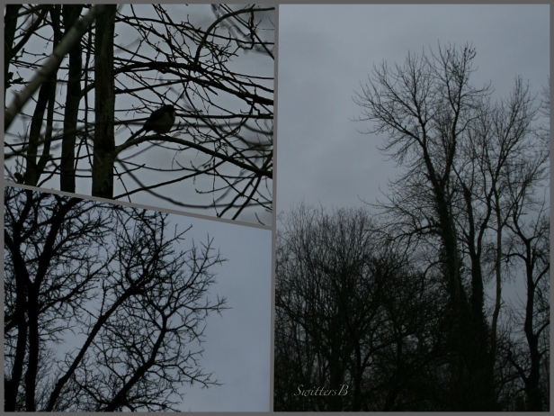 last light-contrast-tree branches-SwittersB-trees