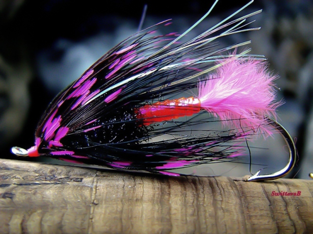 Pink Panther-JHagan-fly pattern-SwittersB-photography