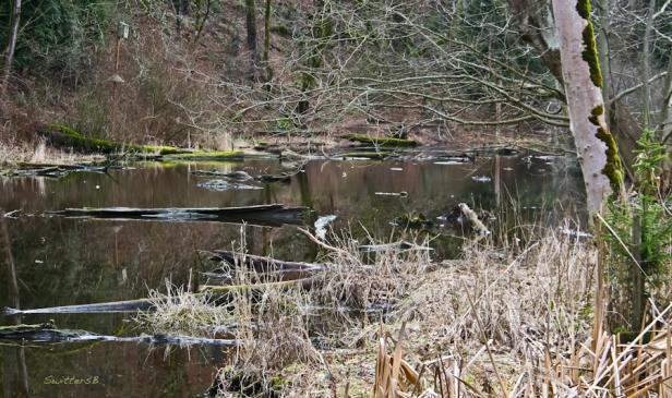 reed canyon-wetland-Oregon-Portland-Winter