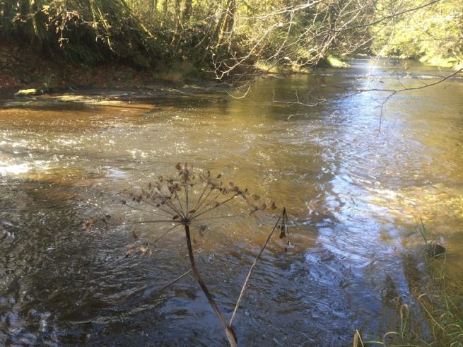 slow flow-river-Oregon