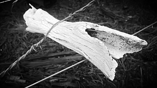 twisted-barbwire-Oregon-rural-photography-SwittersB-TMuncy