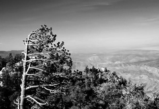 wind shear-Mt. San Jacinto-tree-desert-California-SwittersB