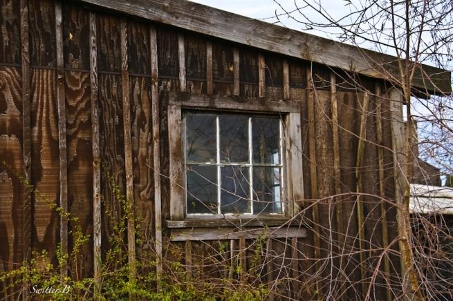 bare wood-grain-sidin-SwittersB-photography-shed