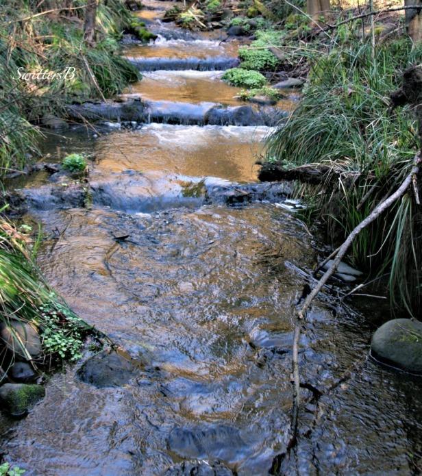Crystal Springs-Portland-stairsteps-Reed Canyon-SwittersB