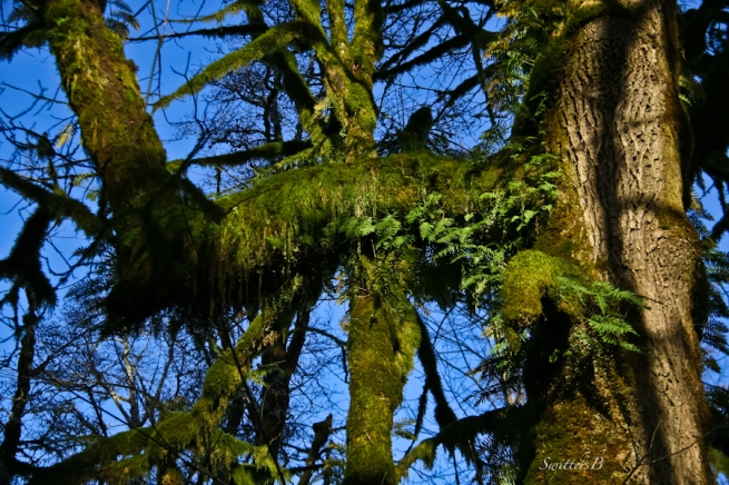 mossy-branches-shadows-ferns-photography-SwittersB
