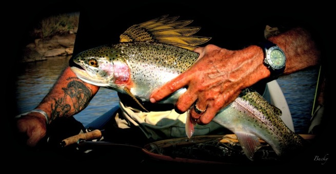 rainbow trout-Oregon-release-indian shirt-SwittersB-Bucky