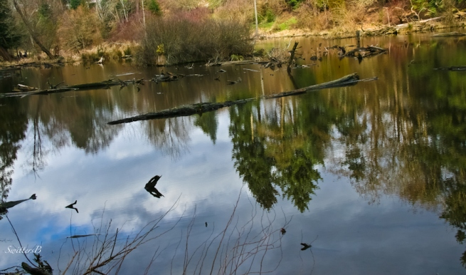 Reed Canyon-Portland-reflections-SwittersB