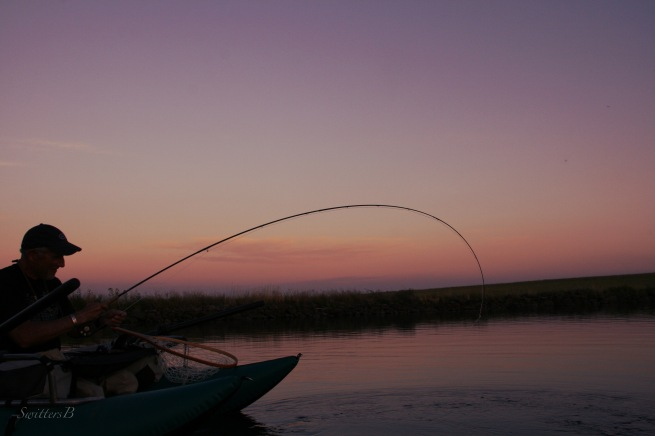 bent rod-last light-fish on-image-Oregon-Switters