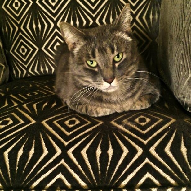 cat-pet-fabric-SwittersB-humor