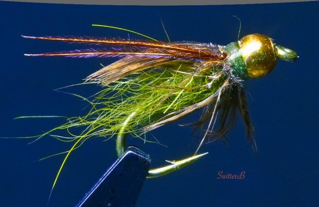green pupa-fly tying-caddis pupa-macro photography