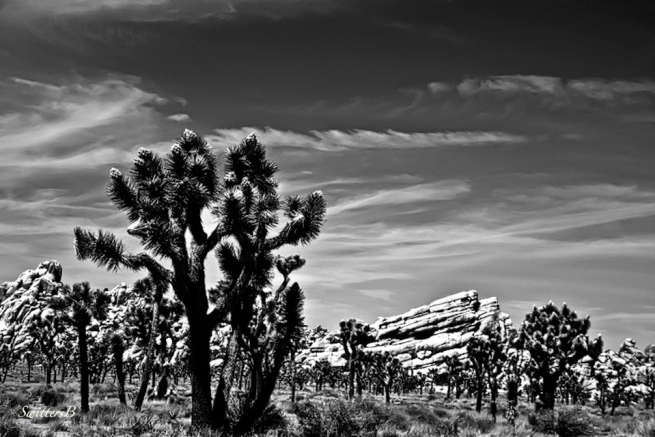 Joshua Tree-Rock formations-nature-desert-photography-SwittersB