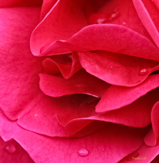 lips-rose petals-macro-photography-red rose-garden-SwittersB