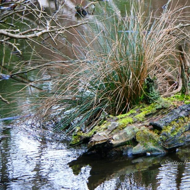 old log-lake-habitat-nature-image-SwittersB