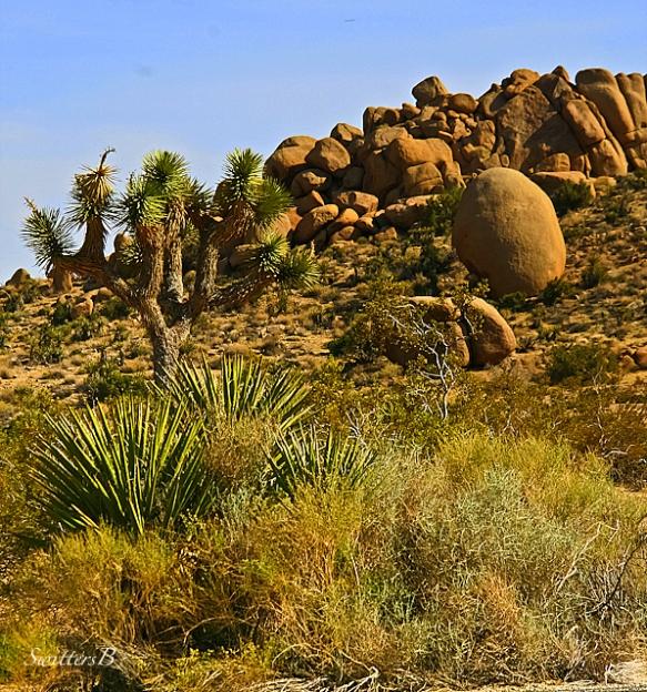 Mojave Desert Native Plants: SwittersB & Exploring
