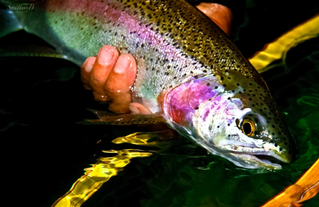 Sleek Trout-Oregon-SwittersB-fly fishing