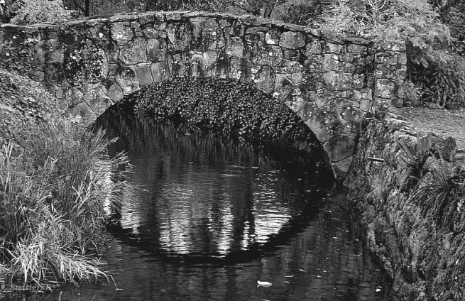 stone bridge brook SwittersB 2
