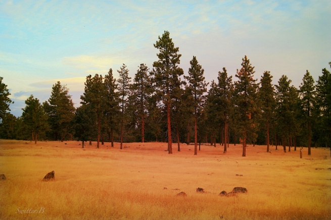 trees--Central Oregon-SwittersB-brown grass-image