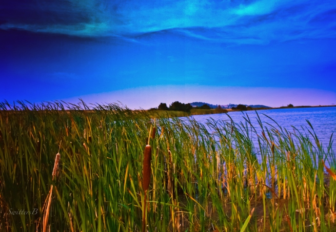 wind-reeds-cattails-Oregon-SwittersB-lake