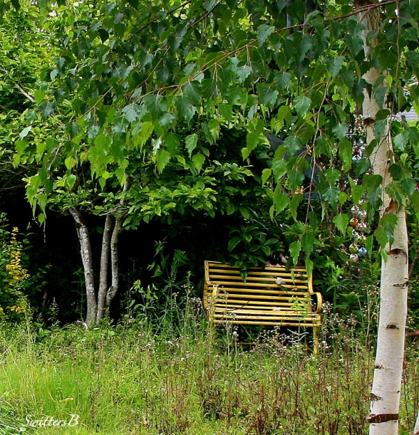 yellow bench-weeds-birch tree-Portland-SwittersB