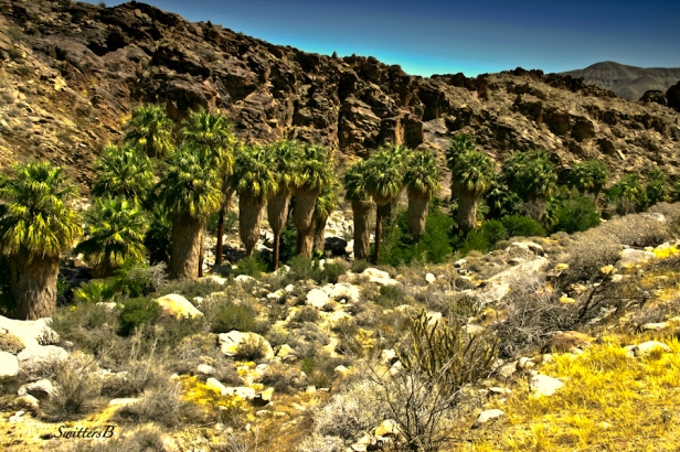 andreas canyon-fan palms-desert-oasis-SwittersB