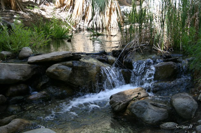 Andreas Creek-Andreas Canyon-desert-SwittersB