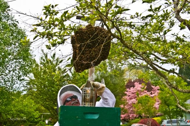 bees-hive-swarm-smoke-beekeeper-SwittersB