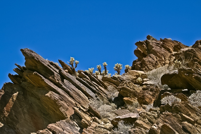 cactus-rock formation-angles-Andreas Canyon-SwittersB-upheaval