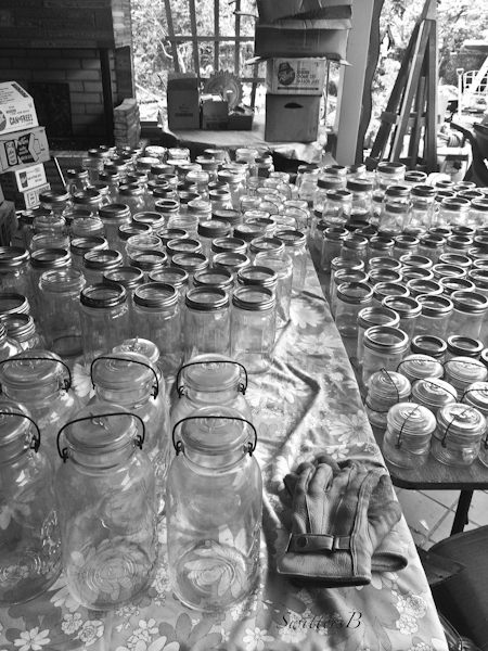 crawl space-canning jars-vintage-hoarding-photo-SwittersB-2