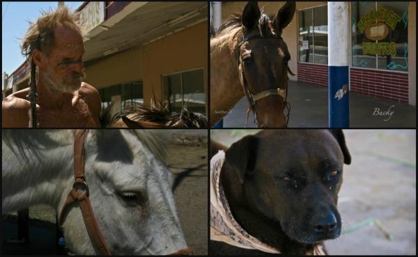 CUERVO-Bucky-mules and dog