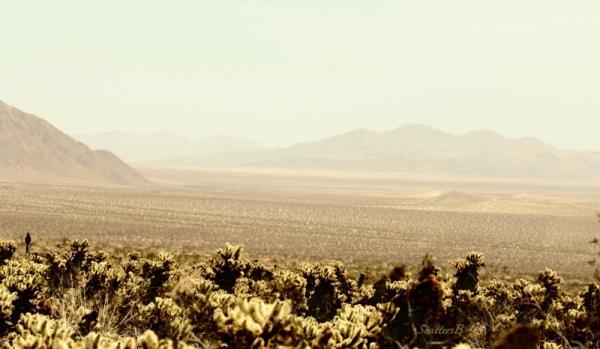 desert-California-photo-Pinto Basin-haze-SwittersB
