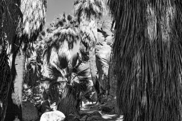 fam palms-Andreas-SwittersB