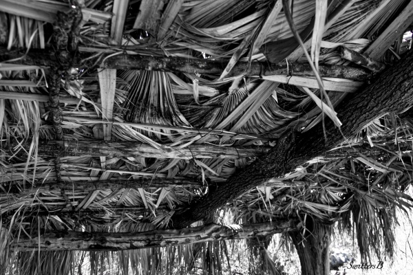 fan palm roof-Andreas Canyon-desert-SwittersB