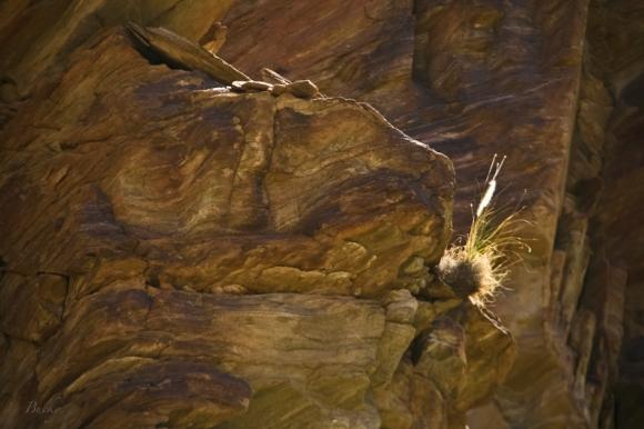 grass-rock ledge-cliff-SwittersB-desert-Bucky