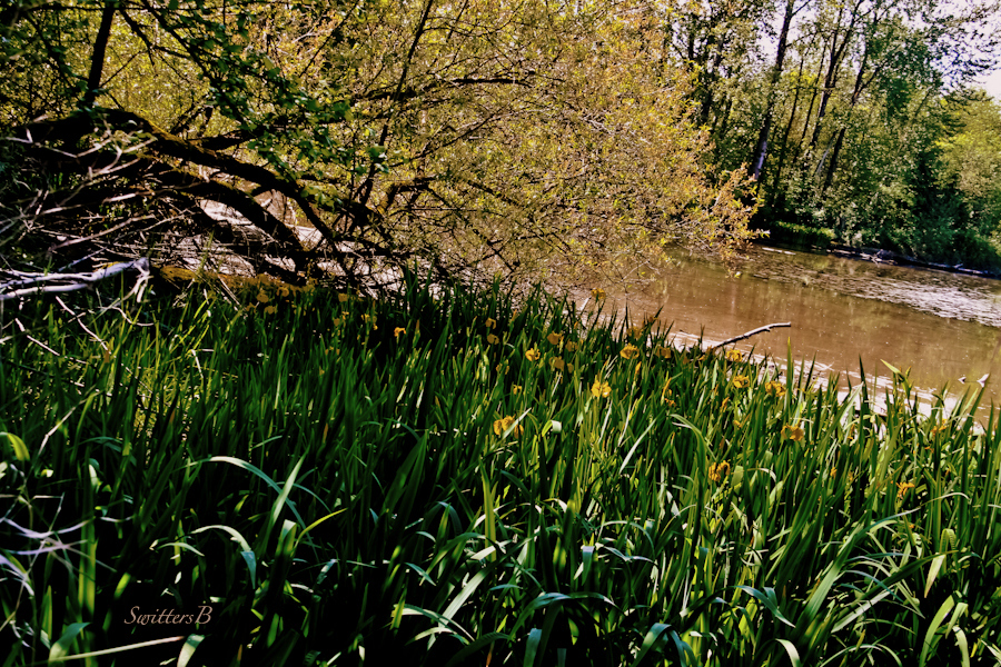 Whitaker Ponds Nature Park