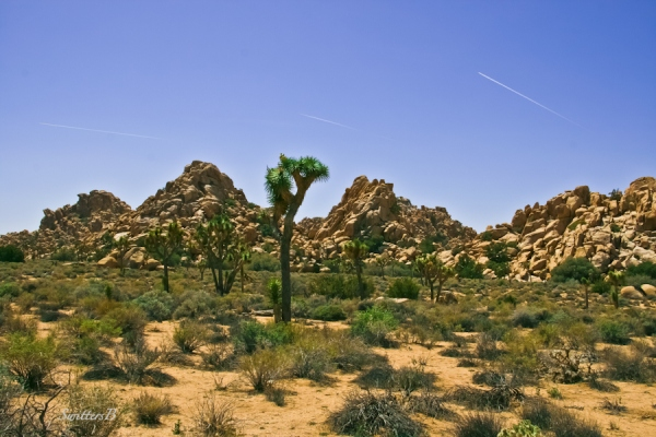 Joshua Tree National Park-chemtrails-rock formation-desert-rock formations-SwittersB