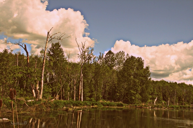 kodak-sky-clouds-Portland-photography-SwittersB