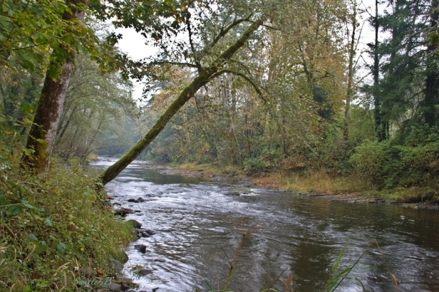 leaning tree-river-nature-rapids-SwittersB