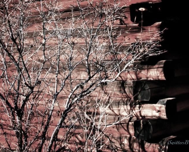 log cabin-bush-Oregon-SwittersB