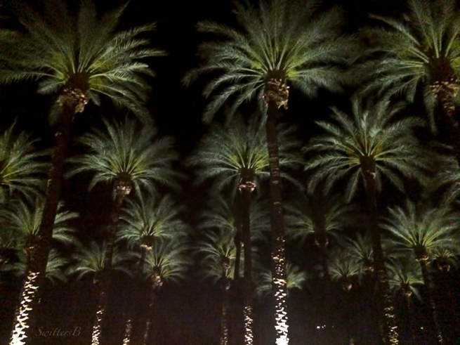 palm trees-night lights-Indian Wells-SwittersB