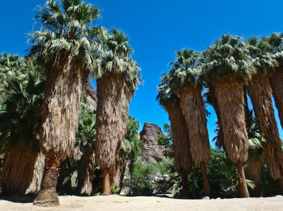 Andreas Canyon, California, Fan Palms, SwittersB