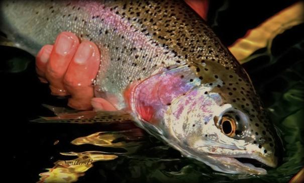 Rainbow Trout-Oregon-fly fishing-photo-SwittersB-fishing