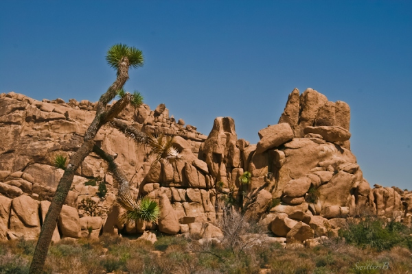 rock formation-Joshua Tree-desert-SwittersB